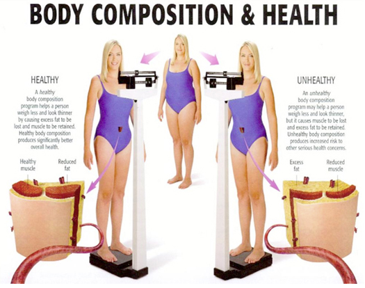 Body Composition and Health